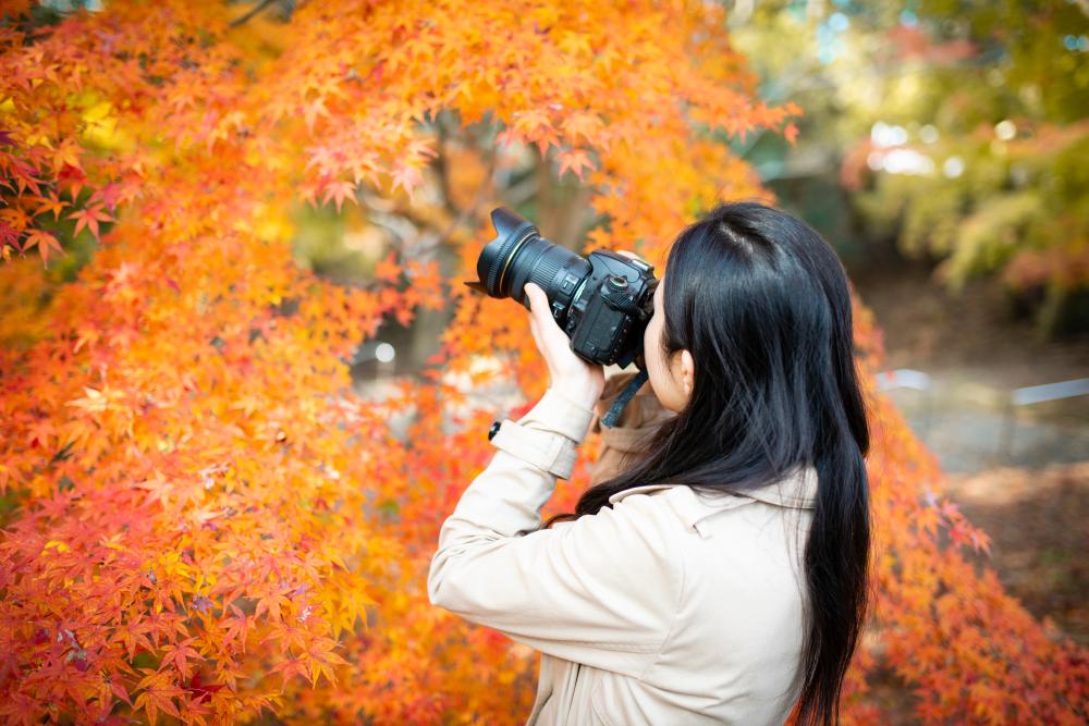 きれいな写真を撮りたい!初心者がカメラを選ぶときのポイントとは?